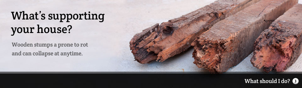 Rotten Wood Stumps